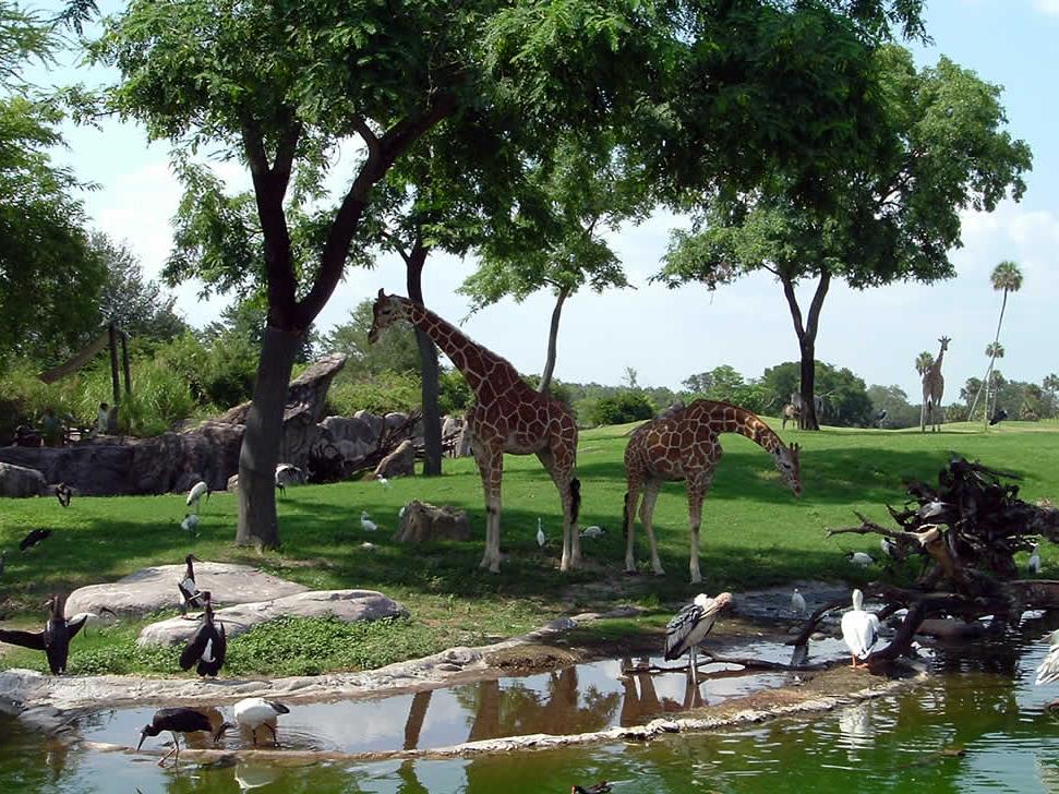 Serengeti Safari At Busch Gardens Seaworld Parks Bookings